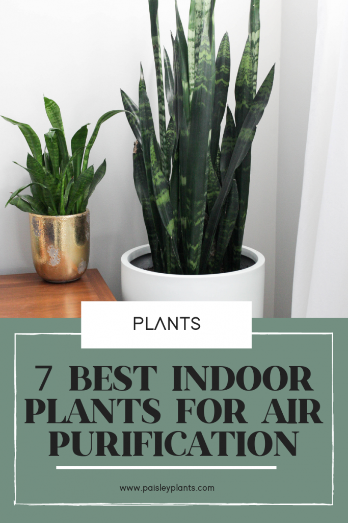 7 Best Air Purifying Plants