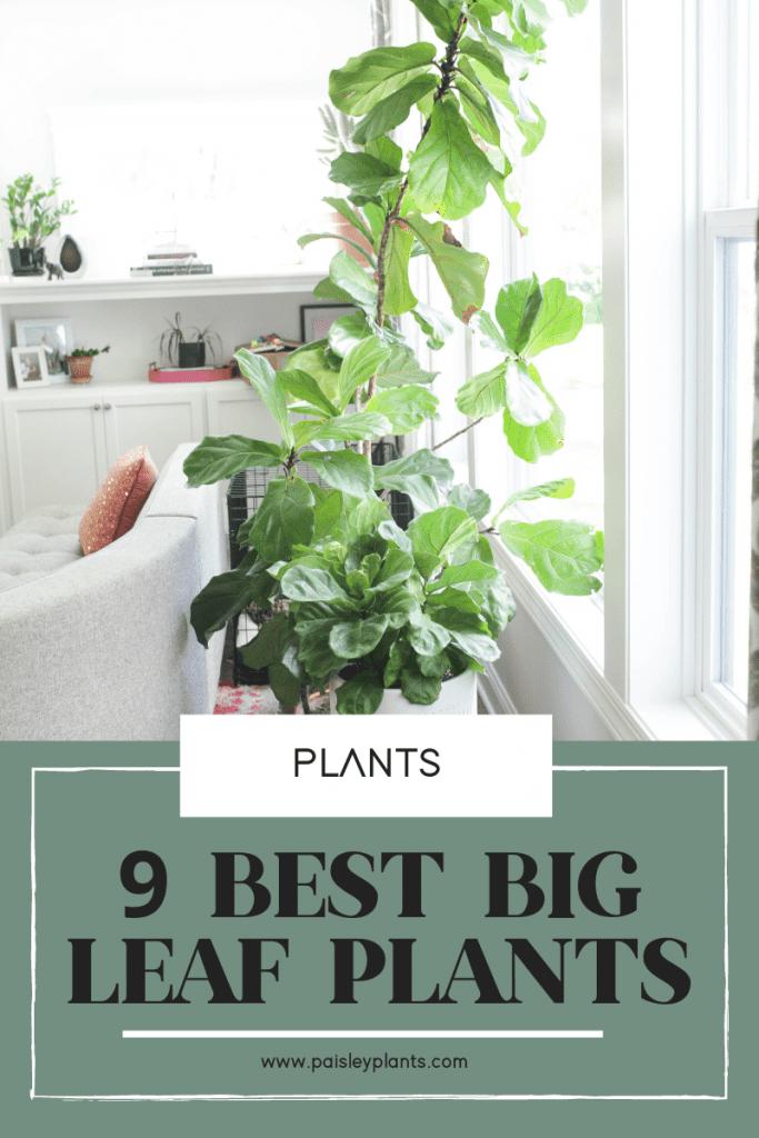 9 Stunning Big Leaf Plants You Need