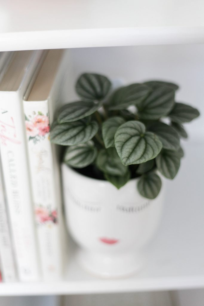 The Peperomia Plant is a beautiful, ornamental plant that's a great houseplant for beginners! We explore all the plant care tips you need to know.