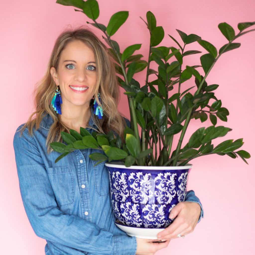 ZZ Plant Care: Zamioculcas Zamifolia Growing Tips