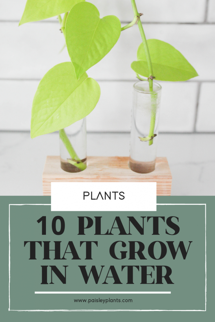 10 Easy Plants That Grow In Water