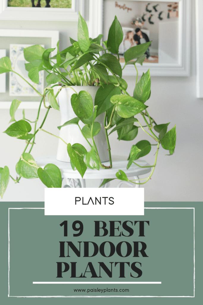 19 Best Indoor Plants That You Need