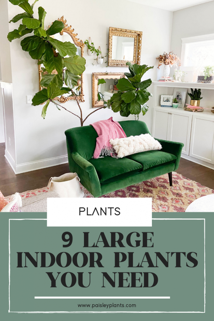 9 Amazing Large Indoor Plants You Need In Your Home