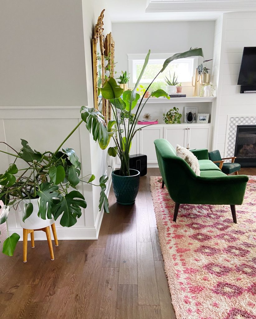 Monstera in home