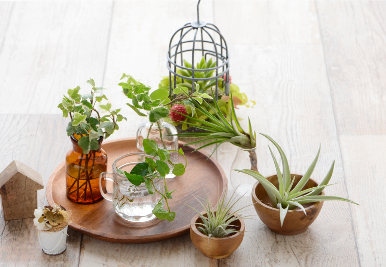 where to put air plants