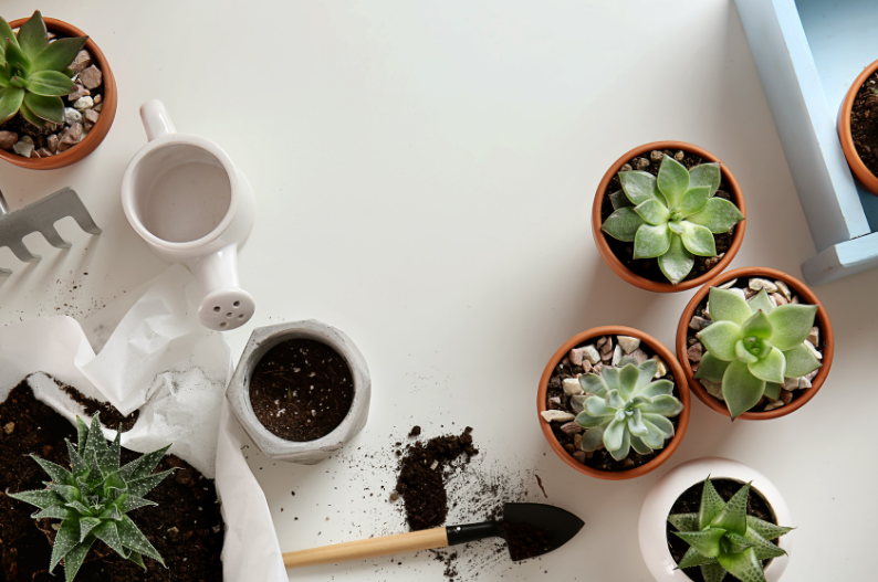 How to Make Your Own Succulent Soil