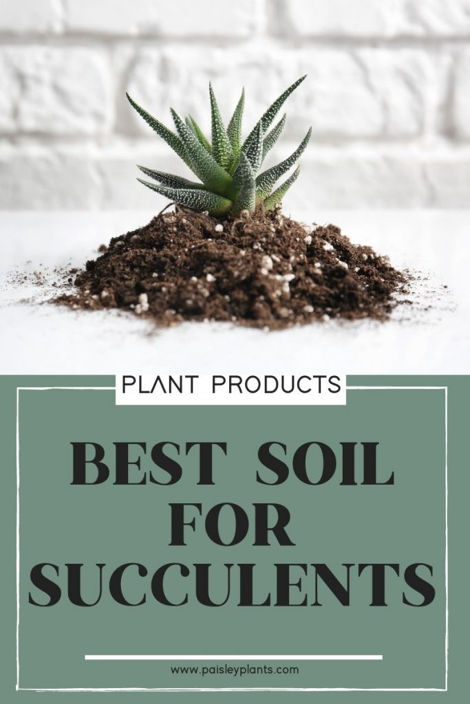Best Soil for Succulents & Tips to DIY