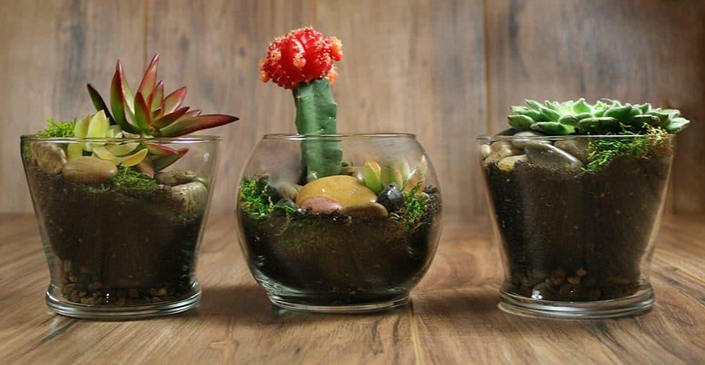 Succulent Planter Soil Kit from TerraGreen Creations