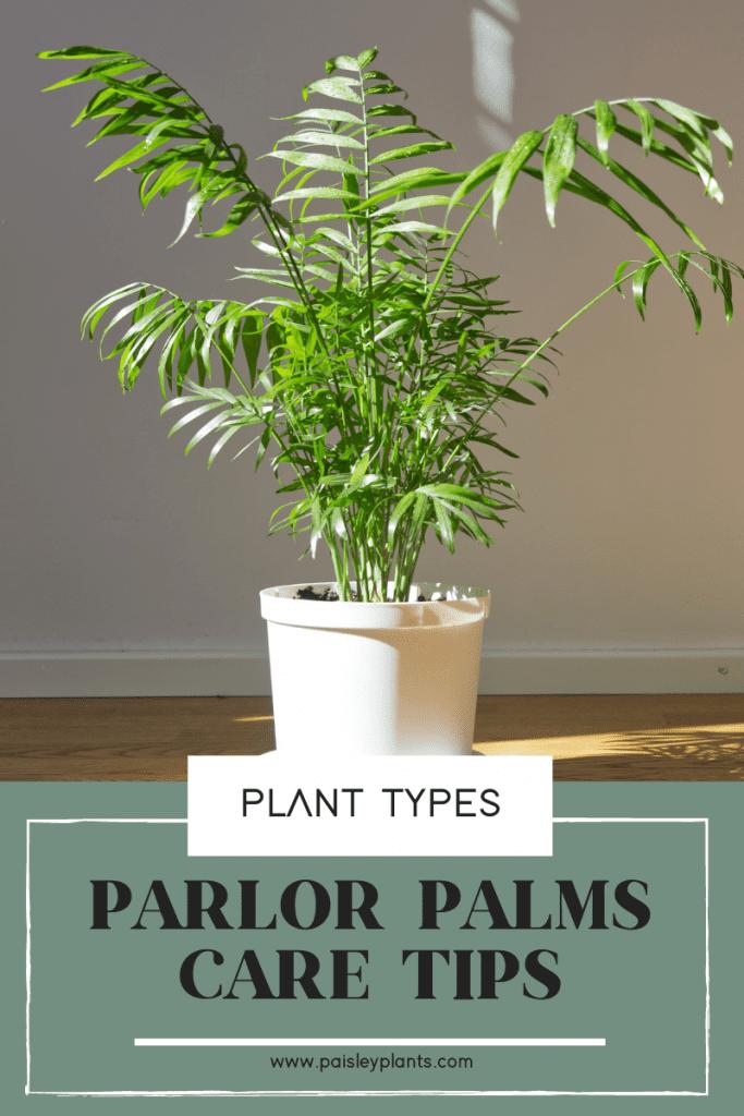 Parlor Palm: A Simple Care Guide