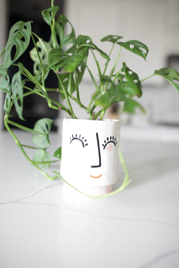 Face pot with plant
